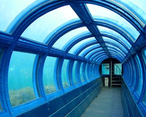 Pulau Putri Resort - Undersea Aquarium